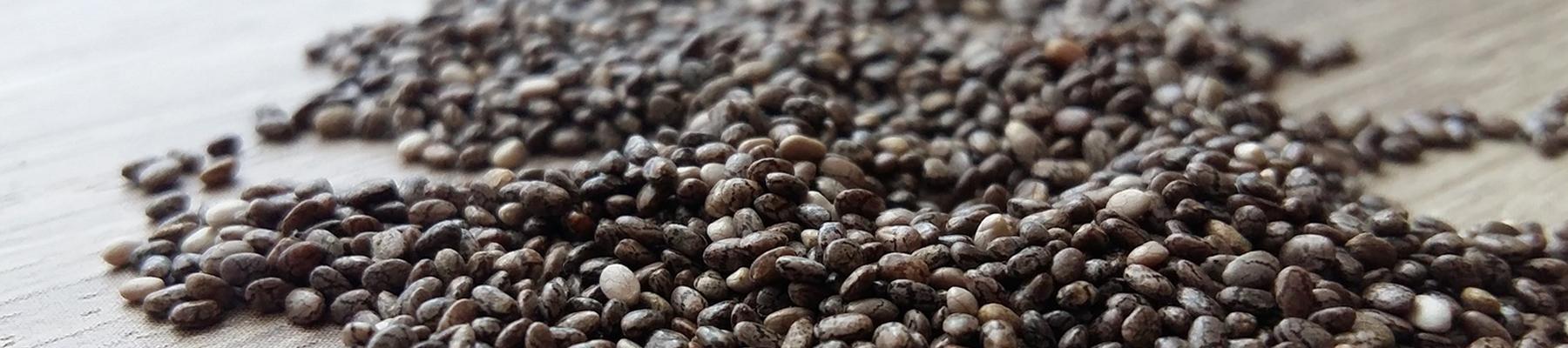 Tu Semillero para todo el año, más fácil con Surdeplant - Surdeplant